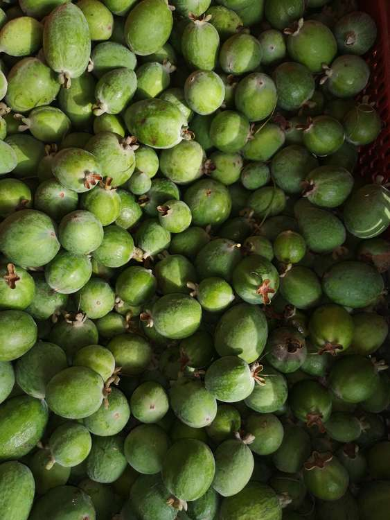 Feijoas Bio - par 500g : Fruits